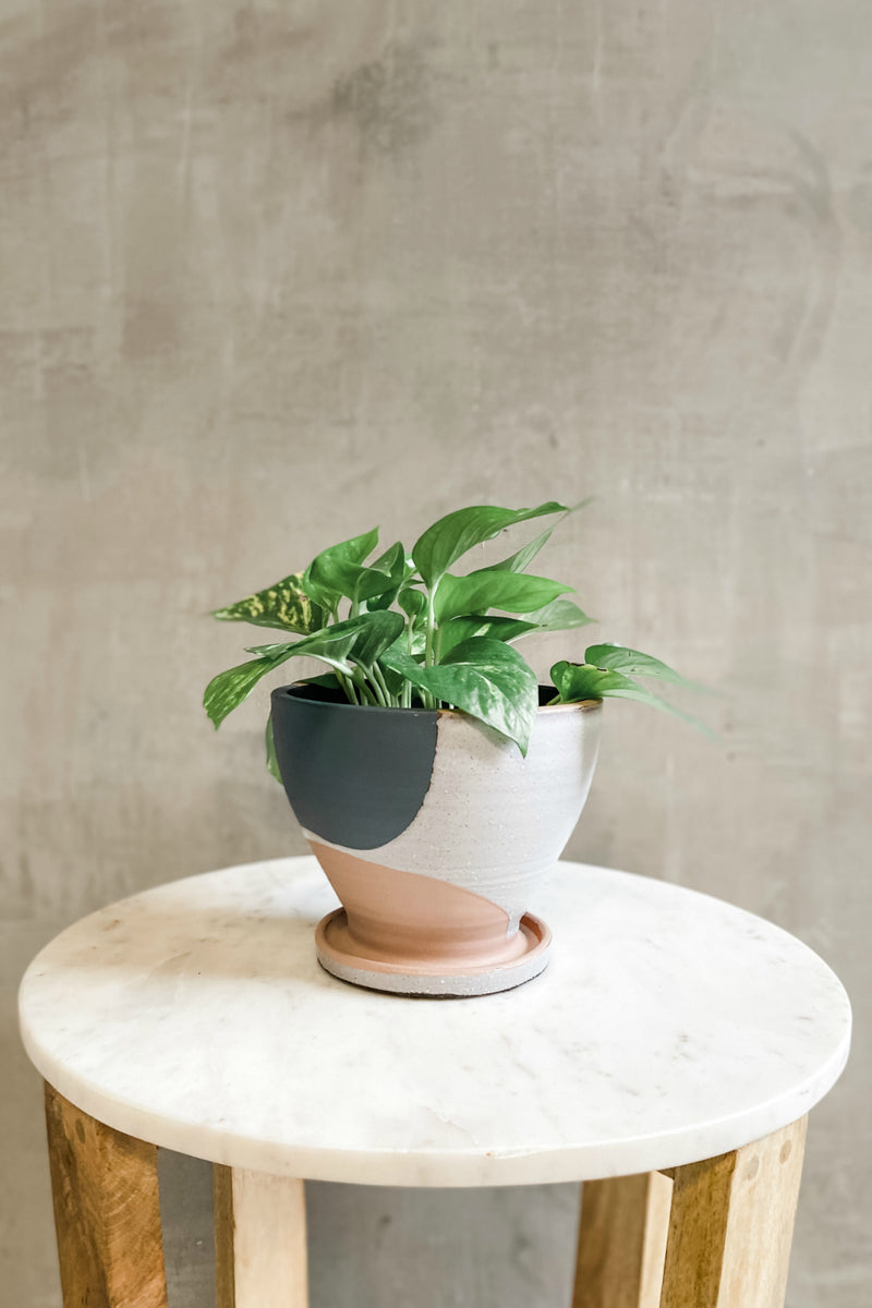 Accent Decor Modera Pot