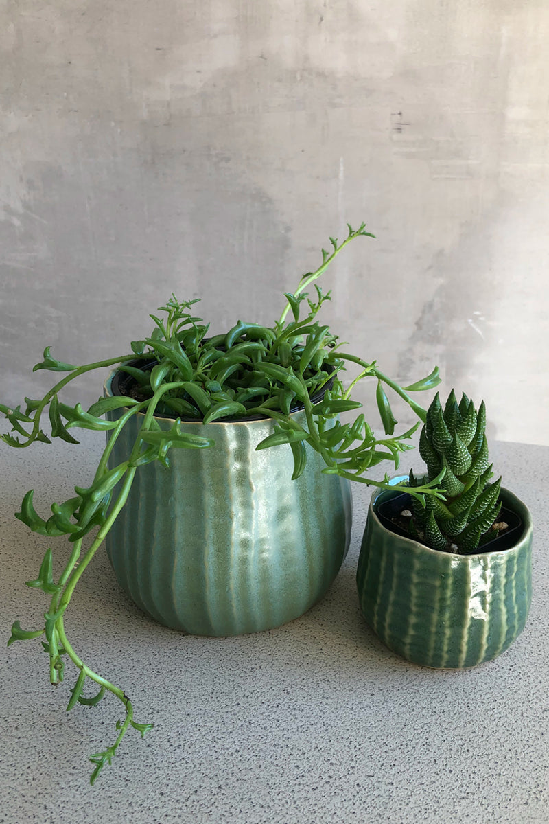 Accent Decor Palmero Pot