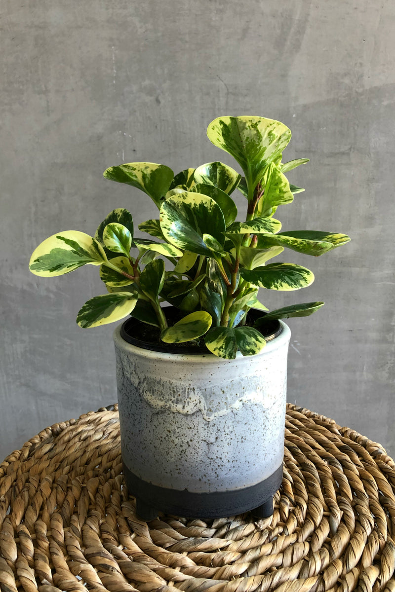 Accent Decor Lova Footed Pot