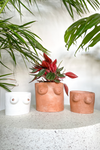 The Archer and The Ram Love Yourself Planter Collection