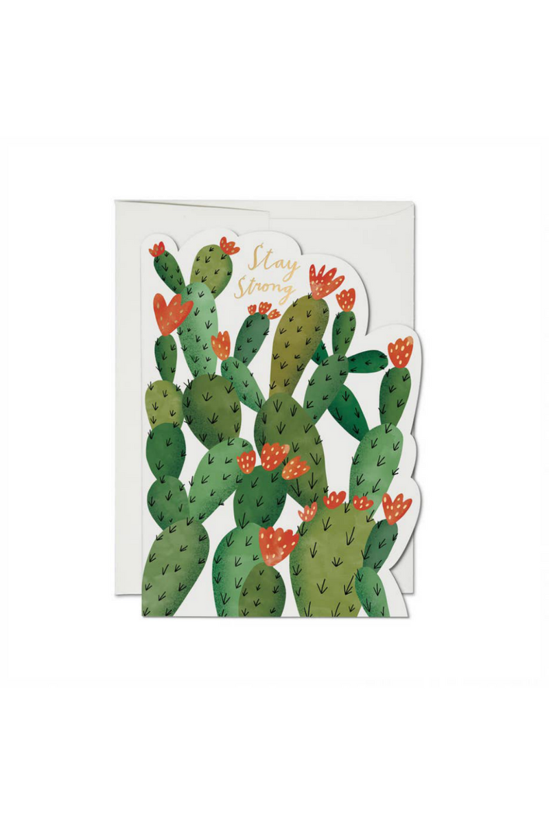 Red Cap Cards Stay Strong Cactus