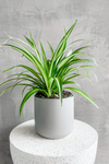 Accent Decor Kendall Pot in Grey