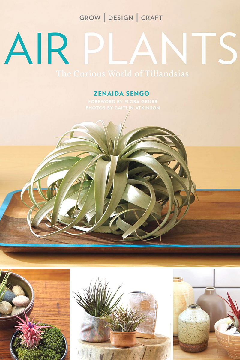 Air Plants The Curious World of Tillandsias By Zenaida Sengo Photographs by Caitlin Atkinson, Book