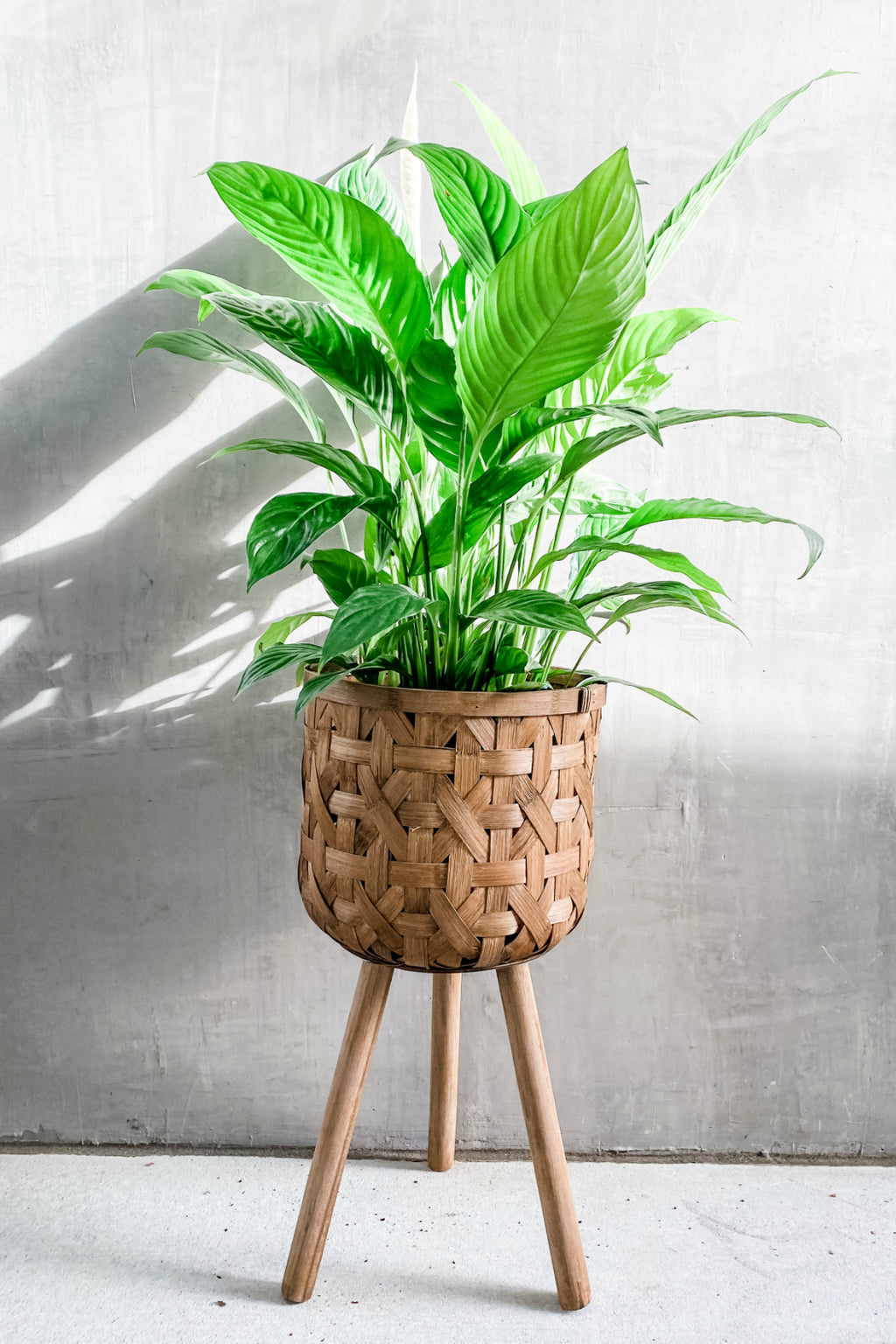 Bam Basket Plant Stand