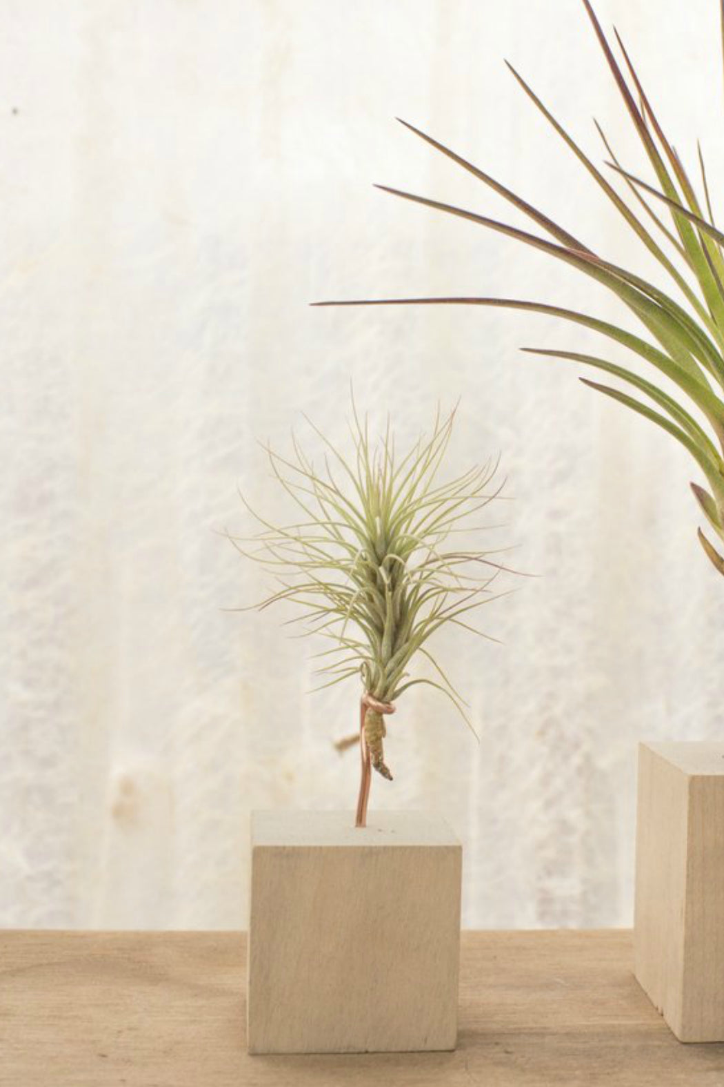 Wood Air Plant Stand Ecovibe