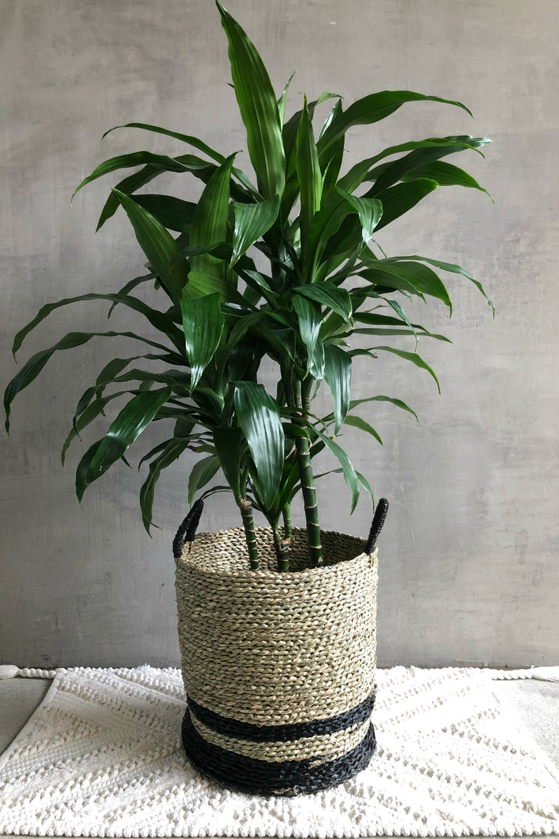 UMA Natural Seagrass Black Stripe Basket
