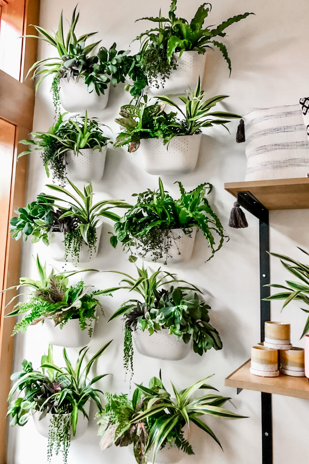 WallyGro Wally Eco Wall Planter