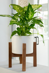 Flora Bunda Dumpling Ceramic Planter with Stand