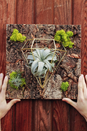 EcoVibe Air Plant Wall Mounting Kit