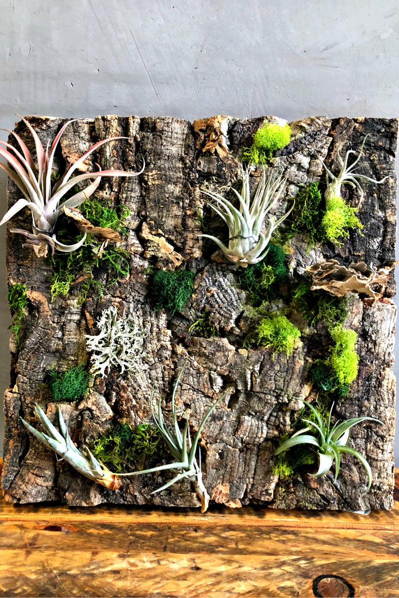 Air Plant Cork Board