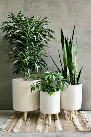 UMA Home Decor White Fiber Clay Cylinder Planter with Wood Legs