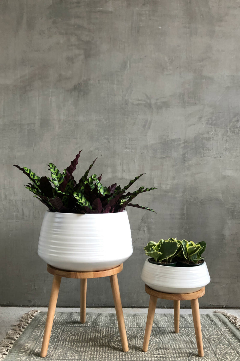 Accent Decor Everett Plant Stand