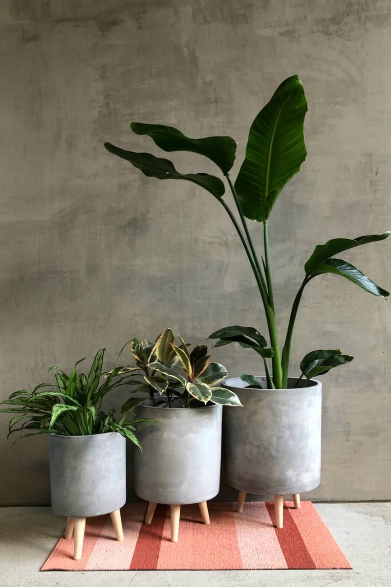 UMA Home Decor Cement Fiber Clay Cylinder Planter w/Wood Legs