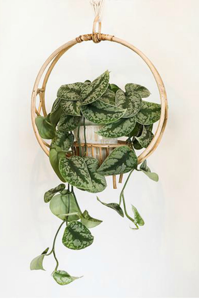 Bloomingville Rattan Plant Holder