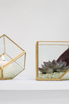 EcoVibe Style - Accent Decor Hira Glass Display Box