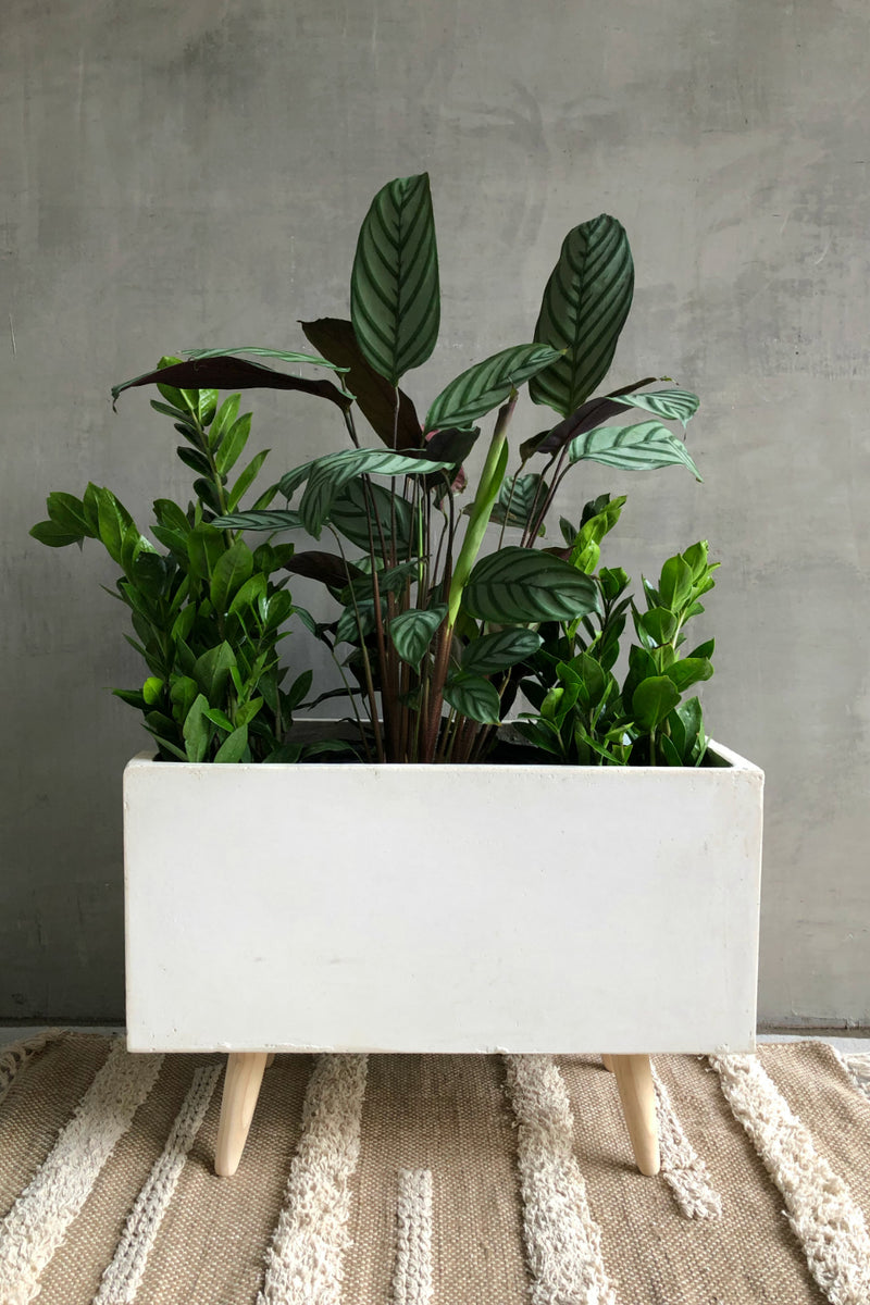 UMA Home Decor White Fiber Clay Rectangular Planter w/Wood Legs