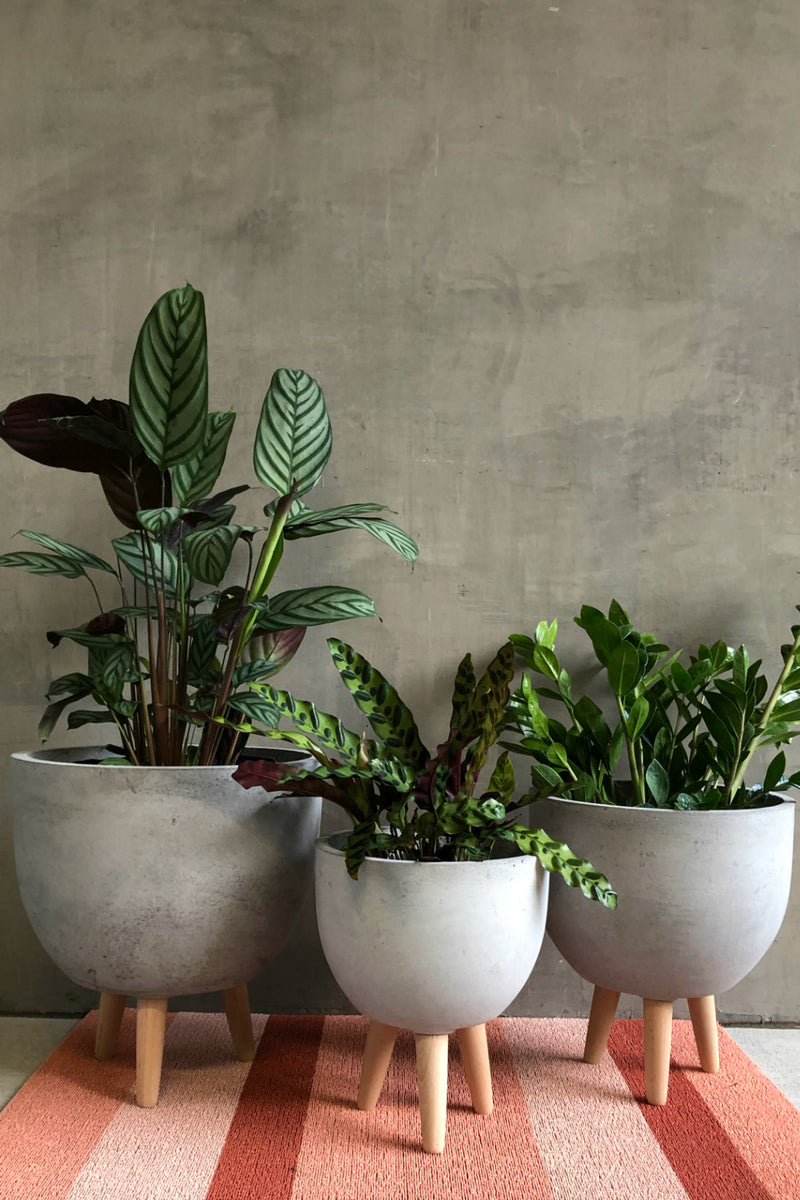 UMA Home Decor Cement Fiber Clay Round Planter w/Wood Legs