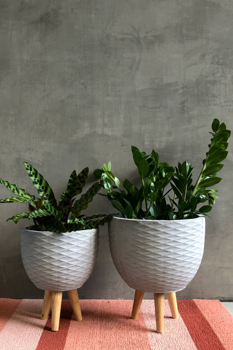 Round Textured Cement Fiber Clay Planter with Wood Legs