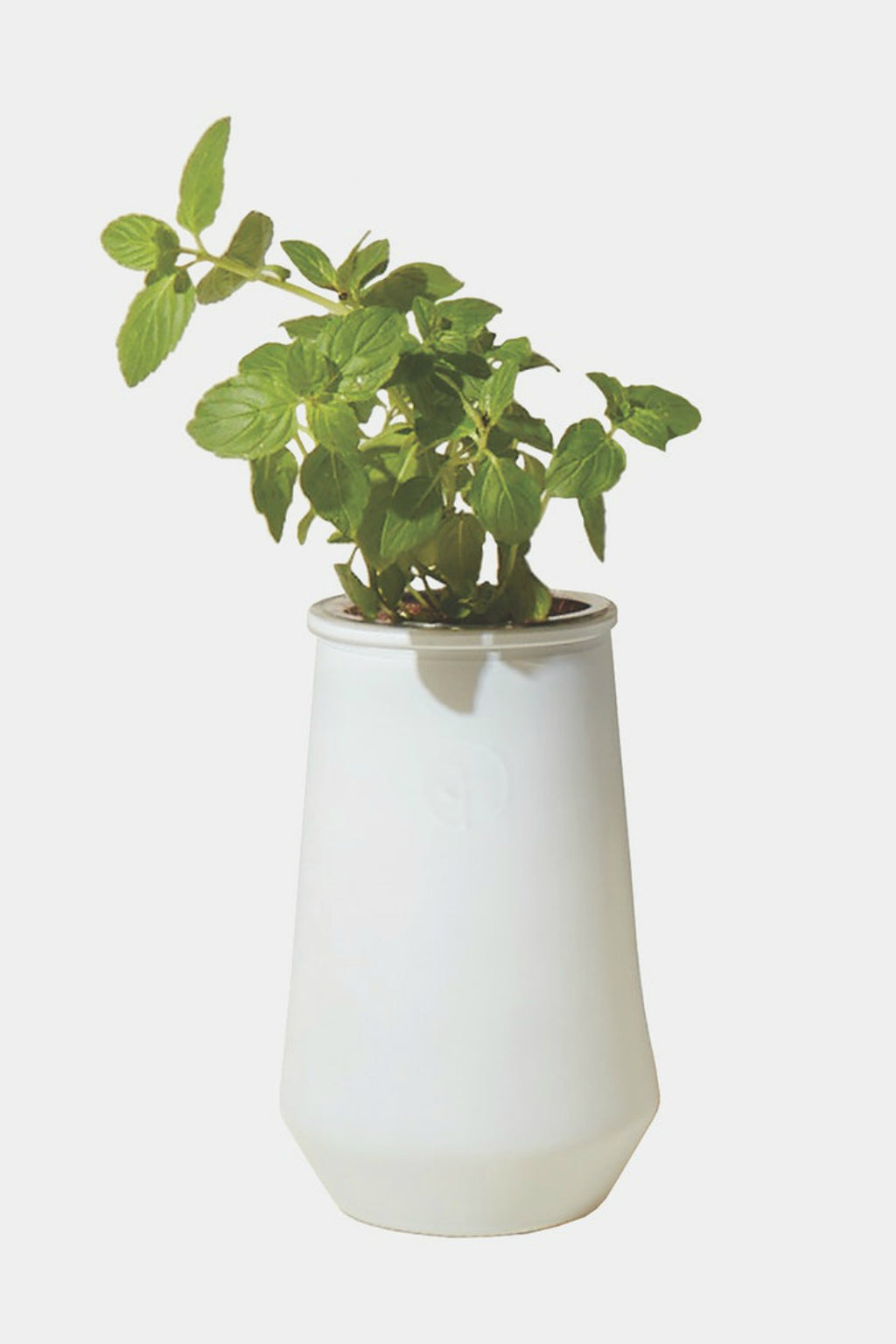 Modern Sprout White Tapered Tumbler Hydroponic Grow Kit - Mint