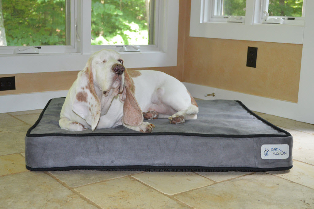 New product launch - SerenityLounge Dog Bed in Solid Memory Foam