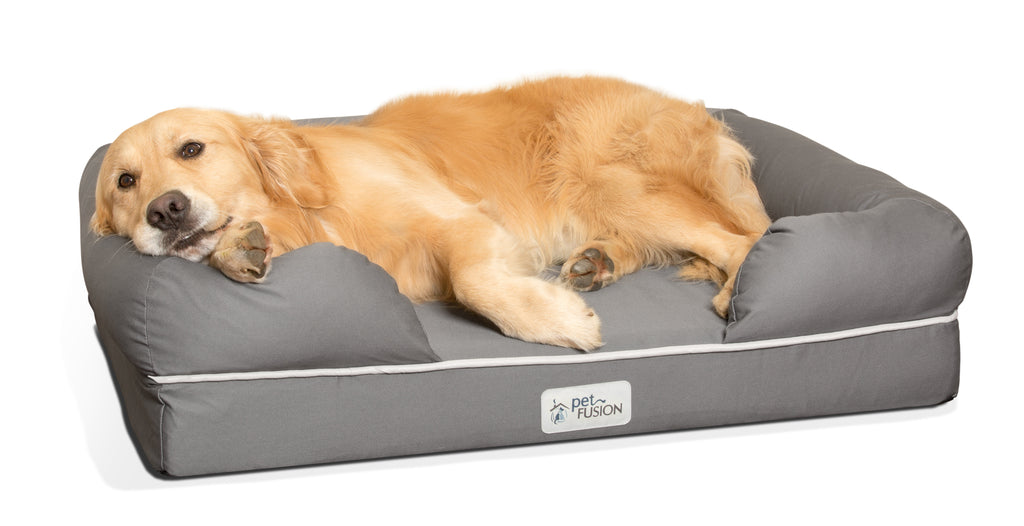 All Dogs Can Benefit From Memory Foam