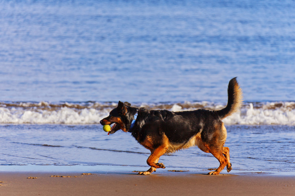 10 Dog Friendly Beaches You Need to Visit This Summer