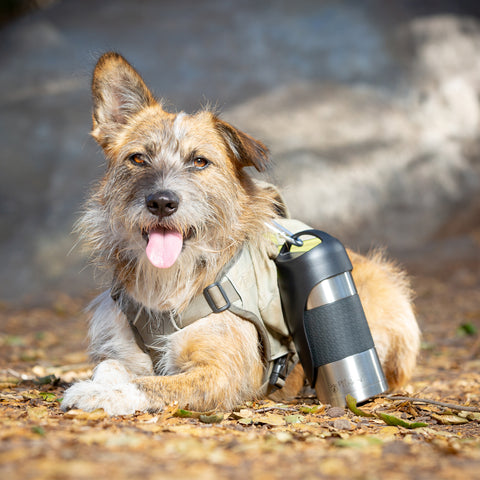 PetFusion Travel Bottle for Dogs - PetFusion