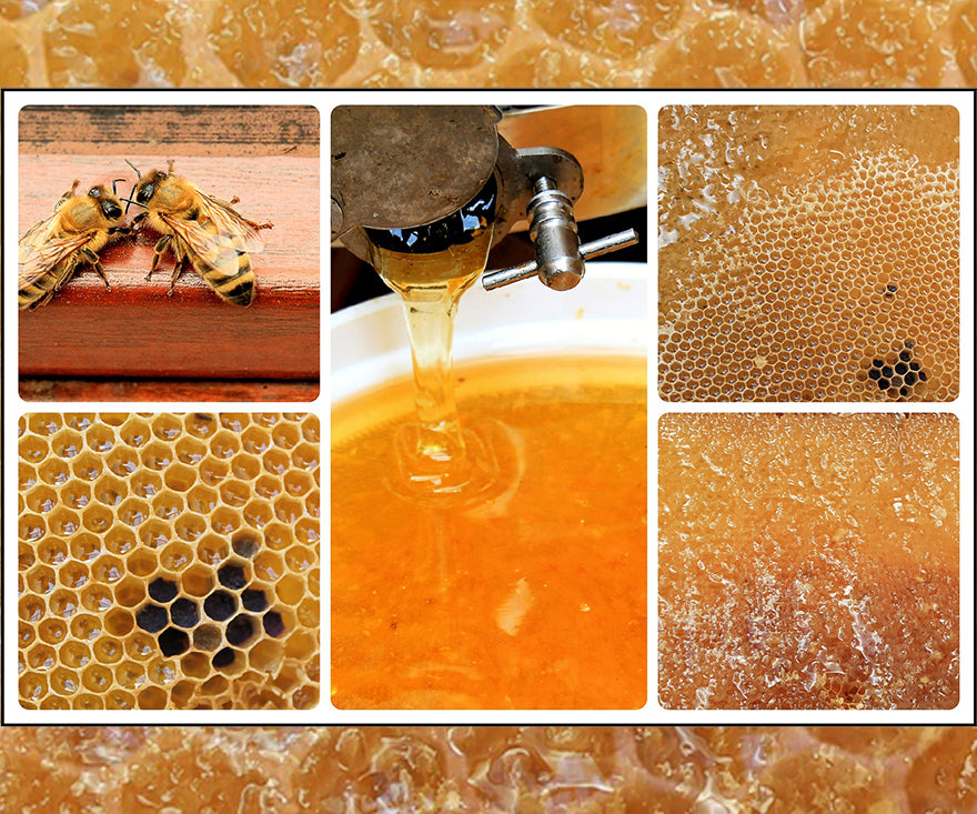 Manuka is No Ordinary Honey
