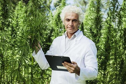Hemp CBD Oil Scientist