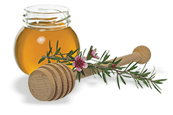 Medicinal Health Benefits from Manuka Honey