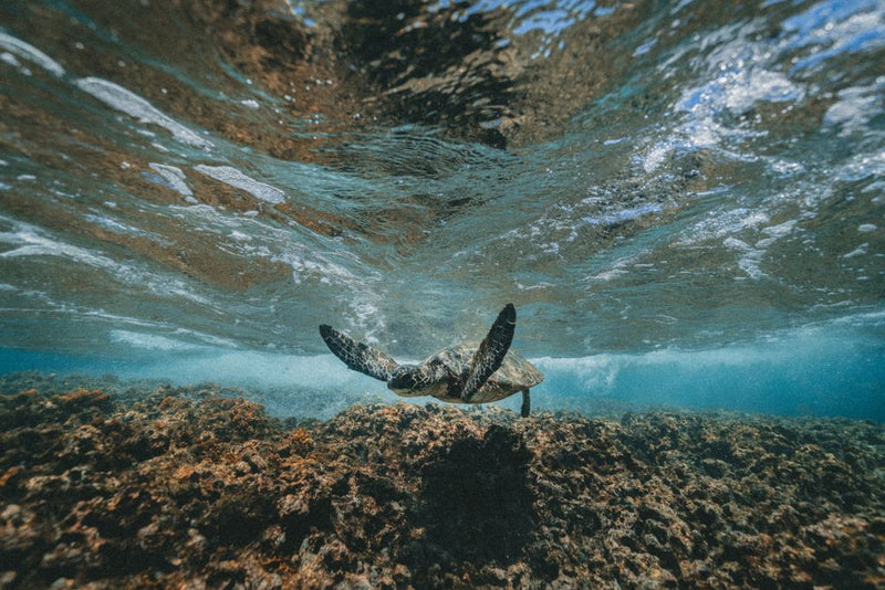 Mountain Biking, Volcano Hiking & Snorkeling Adventures on the Big Island of Hawai'i
