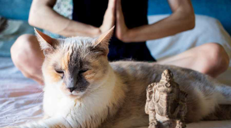 Protecting Your Energy Healing Practices
