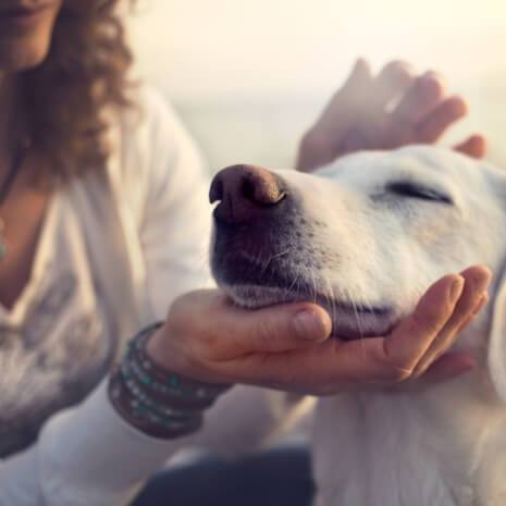 Animal Healing Maintenance Attunement