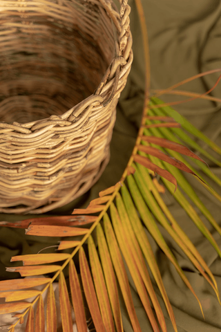 Natural rattan material collection and processing
