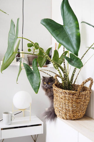 Green home decor helps you relaxing 001