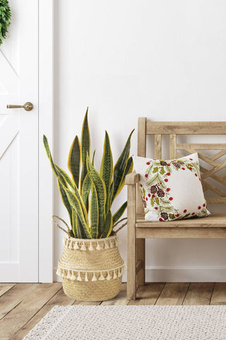 Something green is one of the entryway essentials