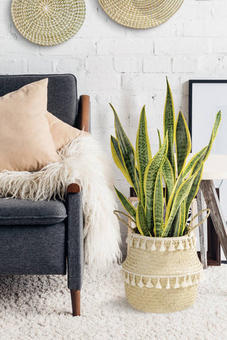 The best way to refresh your space is to add green touches
