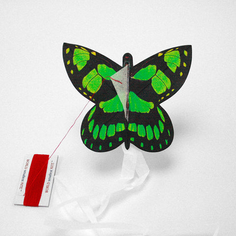 Kite butterfly malachite