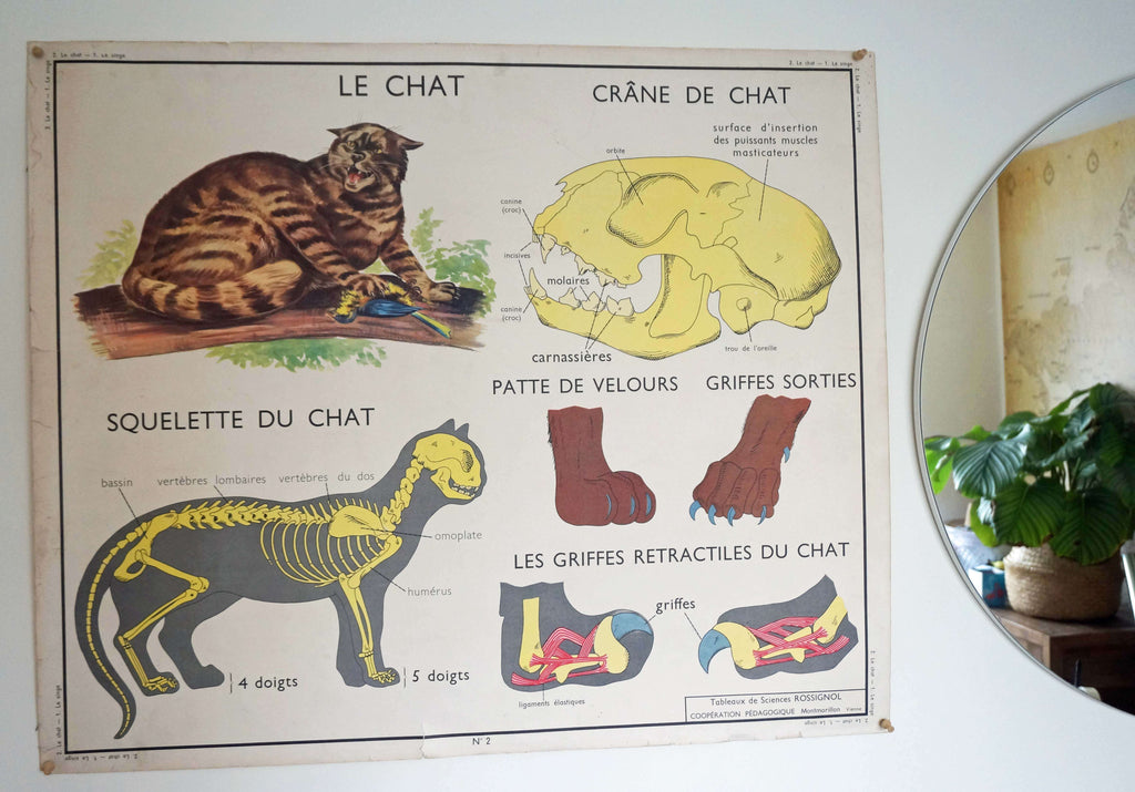 Vintage 1950s Gorialla + Cat Educational Poster - Ada's Attic Vintage 4
