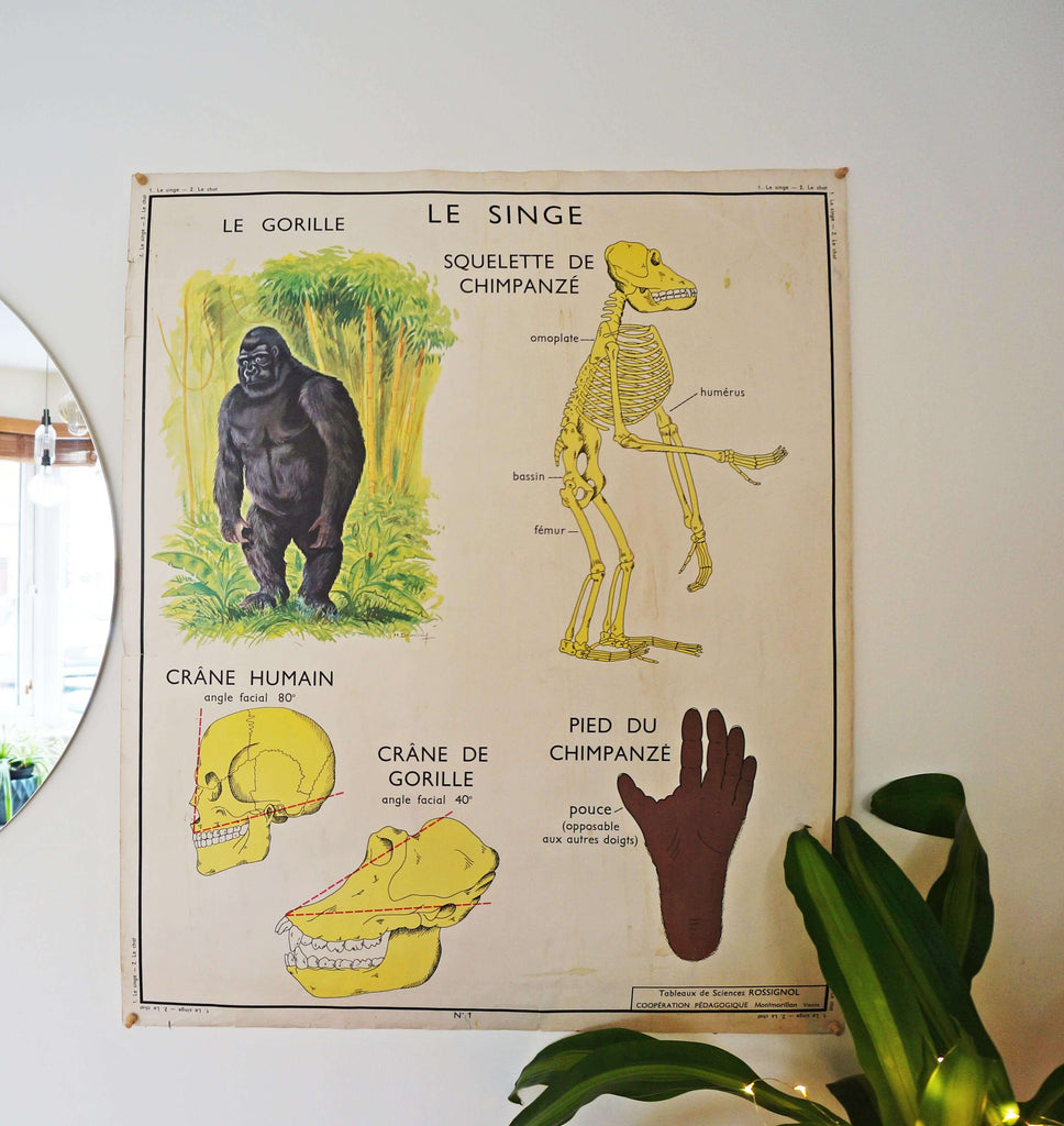 Vintage 1950s Gorialla + Cat Educational Poster - Ada's Attic Vintage 3