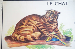 Vintage 1950s Gorialla + Cat Educational Poster - Ada's Attic Vintage 5