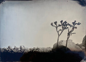 Anne Rivera Print Joshua Tree Nº2