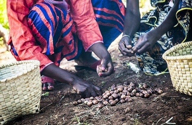 A brief discussion on Shea butter and its source