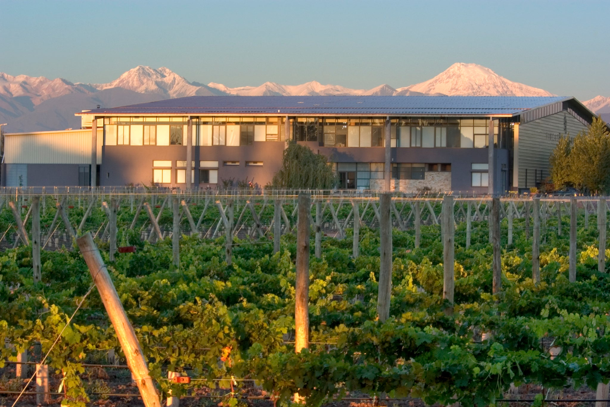 Osmosis Winery and vines