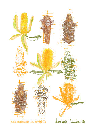 Australian Botanicals Greeting Card Set
