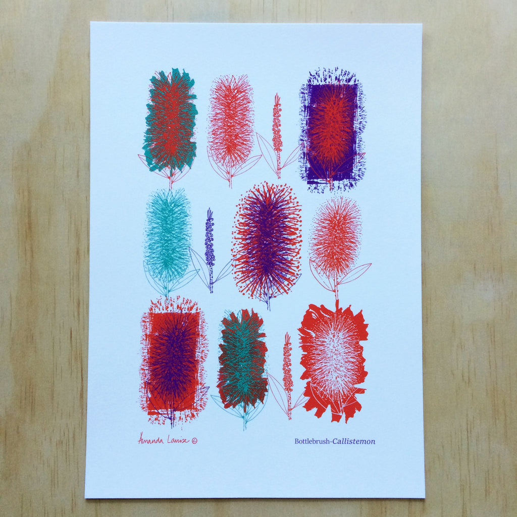 Australian Botanical Bottlebrush Print A4