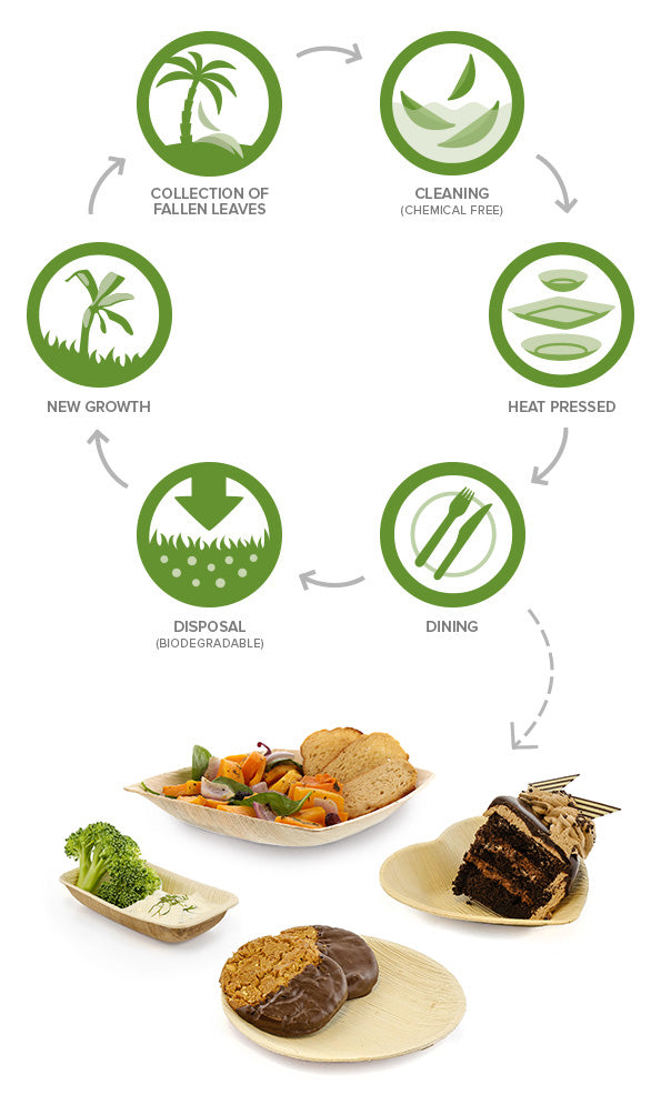 How Palm Leaf Tableware is Made