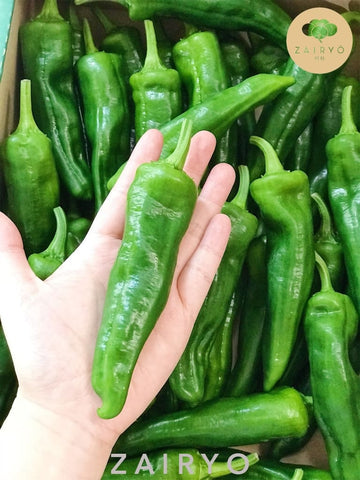 Jumbo Shishito from Ibaraki / ししとう / (Jumbo Japanese Green Peppers)