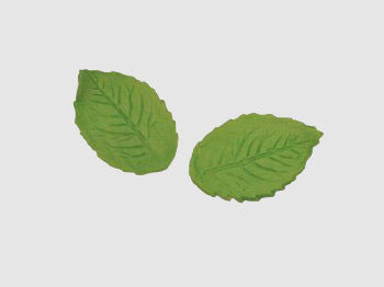 Leaves, Medium