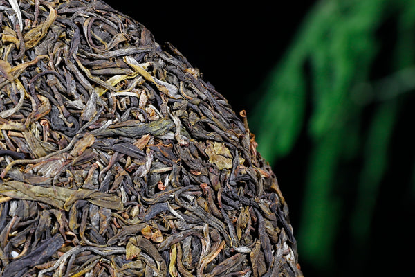 "2018 Yunnan Sourcing ""Wu Liang Mountain"" Wild Arbor Raw Pu-erh Tea Cake"